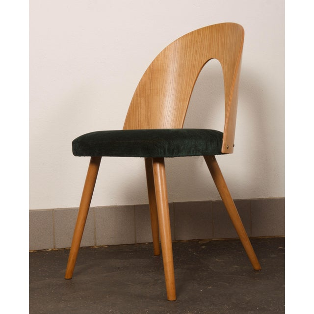 Brown Ash Dining Chairs by Antonin Suman for Tatra For Sale - Image 8 of 10