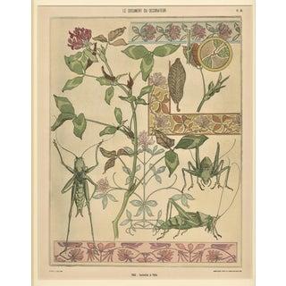 1900 Art Nouveau Design Pochoir Design-Botanical With Grasshoppers, Matted For Sale