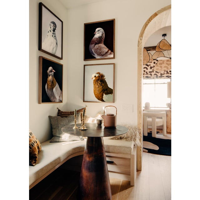 Signed, limited Edition print of Yellow Komorner Tumbler Pigeon by Brendan Burden. The Komorner Tumbler is a small...