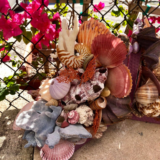 Super way to show off a fine collection of specimen seashells and corals. These quality bookends are lined with ostrich-...