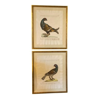18th Century Italian Hand Colored Lithographs - a Pair For Sale