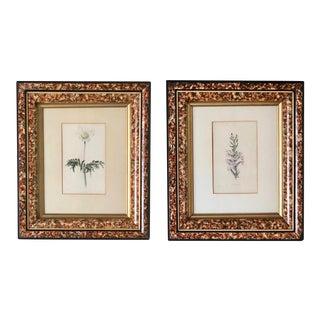 19th Century Loddiges Framed Botanical Prints – a Set of 2 For Sale