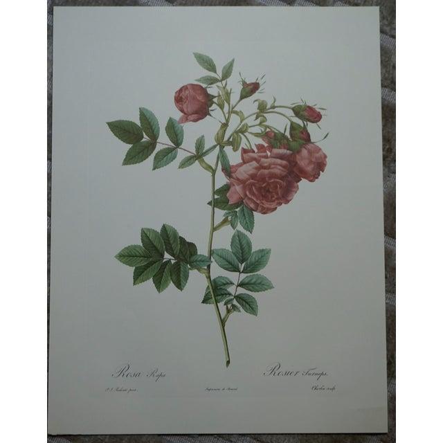 Red Rose Botanical Print - Image 2 of 5