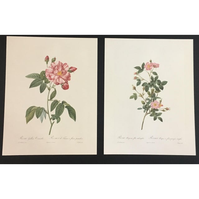 Pair of Botanical Prints After Pierre-Joseph Redouté For Sale - Image 4 of 4