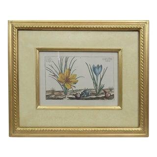 Trowbridge Gallery Botanical Print in Gilt Frame by Crocus Crispin De Passe For Sale