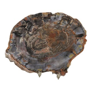 Petrified Wood From Petrified Forest in Arizona For Sale