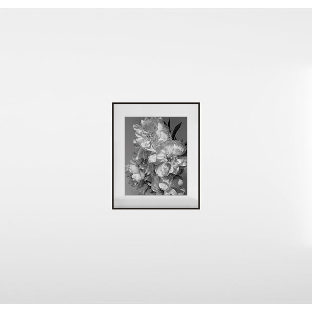 """Contemporary """"Coral Charm Peony III"""", Contemporary, Framed, Photograph by Jean Karotkin For Sale - Image 3 of 5"""