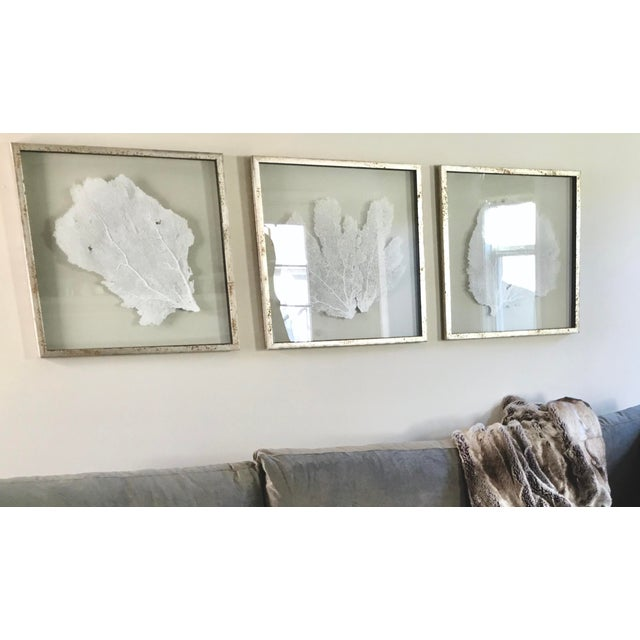 Giant Natural Sea Fans Triptych Framed In Acid Washed Distressed Silver Leaf Moulding Coastal Wall Art Decor From Bliss Home And Design Set Of 3