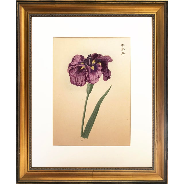 Japanese Iris Woodblock Botanical Print C.1900 For Sale In New York - Image 6 of 6