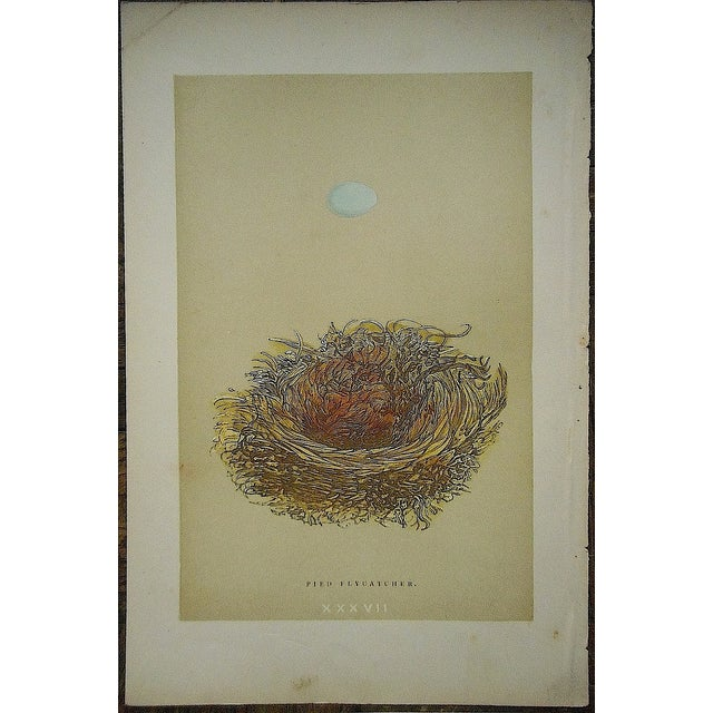 Antique Morris Nest & Egg Prints - Set of 4 - Image 4 of 6