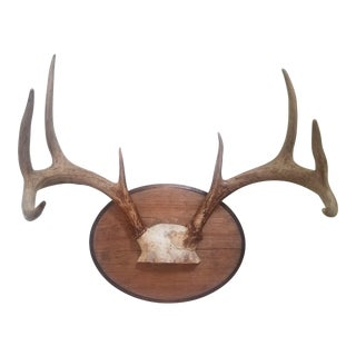 Vintage Four Point Deer Antlers Mounted on Wood Plaque