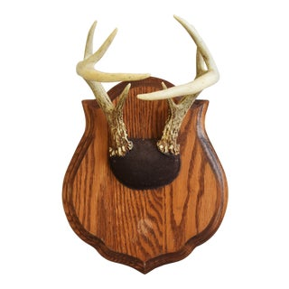 Lodge Decor Mounted Trophy Antlers on Wood Plaque For Sale