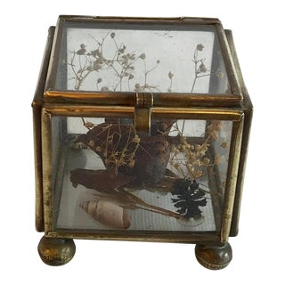 Vintage Mid Century Glass and Brass Dried Botanical Curio Box For Sale