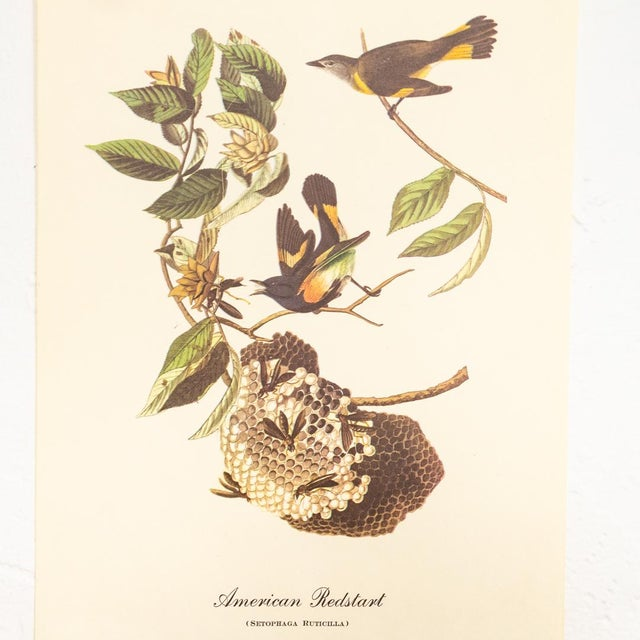 1960s Audubon Bird Prints | 17 Pc Gallery Collection For Sale - Image 6 of 13
