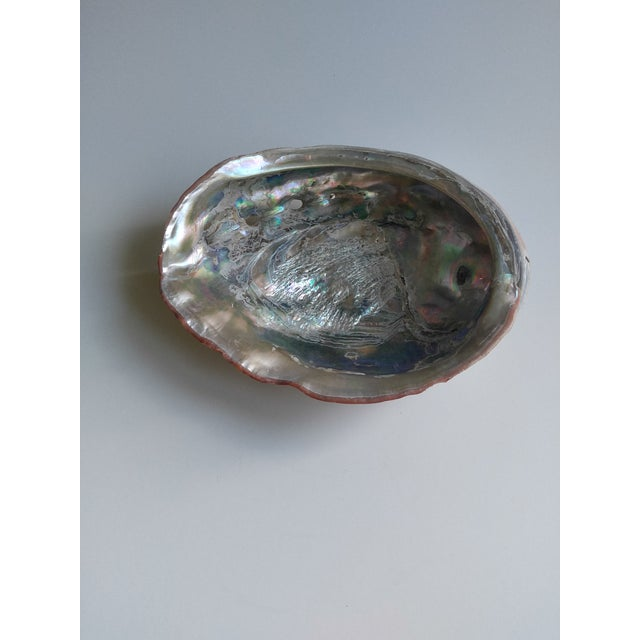 Contemporary Red Abalone Shell Object For Sale - Image 3 of 9