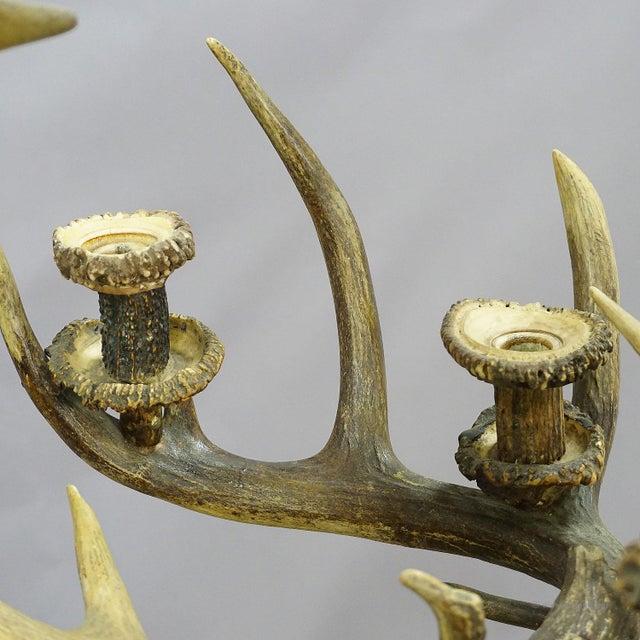 Antique Black Forest Antler Candle Luster 1900 For Sale - Image 9 of 13