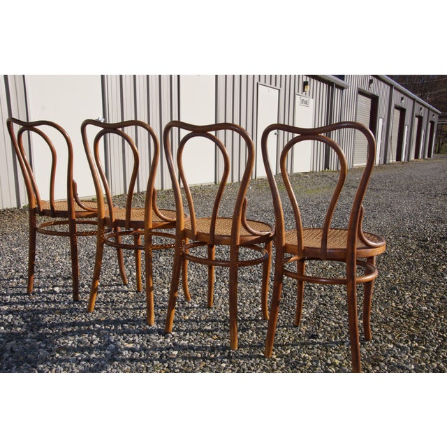 1940s 1940s Antique Thonet-Style Bentwood Heavy Cane Woven Seat Parlor Bistro Chairs - Set of 4 For Sale - Image 5 of 13