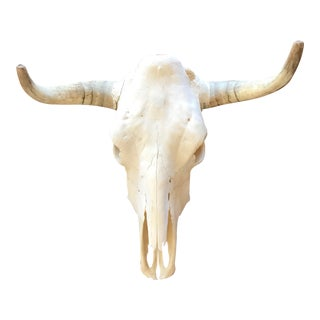 Vintage Longhorn Steer Skull For Sale