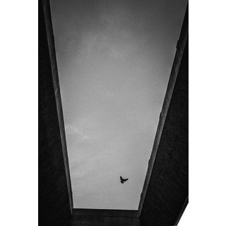 Jason Mageau Lone Bird in Los Angeles Photograph (Canvas) For Sale