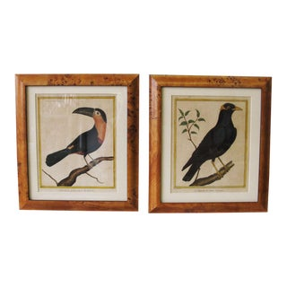 Late 18th Century Hand-Colored French Bird Engravings - A Pair For Sale
