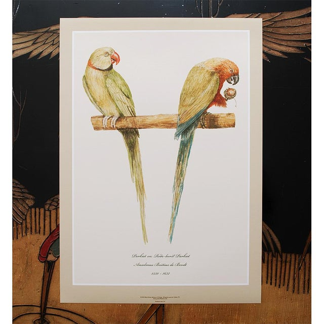 Drawing/Sketching Materials 1590s Large Print of Alexandrine Parakeet & Red-Breasted Parakeet by Anselmus De Boodt For Sale - Image 7 of 9