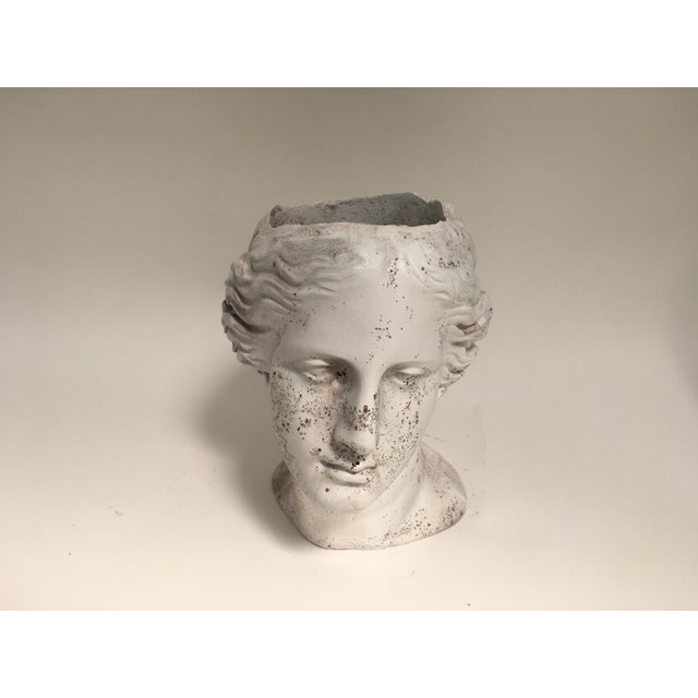 White Weathered Venus Bust Head Planter For Sale - Image 8 of 8
