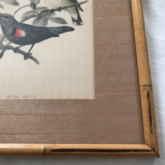 Glass Early 20th C. Framed Avian Prints - A Pair For Sale - Image 7 of 9