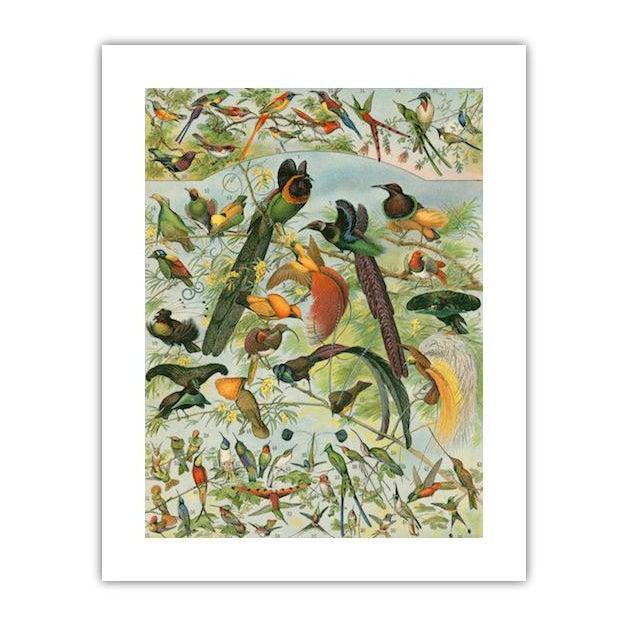Antique 'Hummingbirds & Friends' Archival Print For Sale