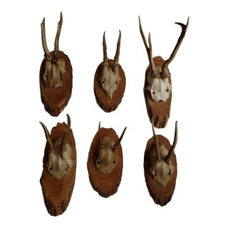 Vintage Mounted European Roebuck Deer Antlers - Set of 6 For Sale