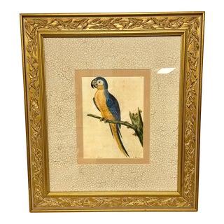 Vintage Framed Blue Macaw Lithograph Print For Sale