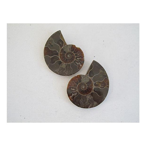 Ammonite Objets - Pair - Image 2 of 4