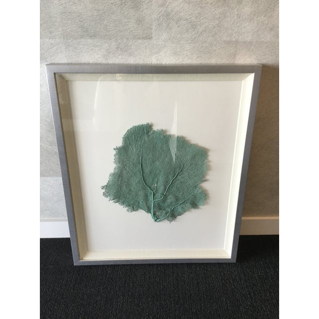 Offered is a great natural sea element mounted on a mat in an antiqued silver frame. Great condition, small blemish on top...