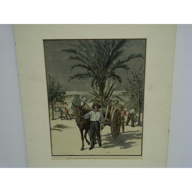 """This is a Matted Original Harper's Weekly Print that is titled """"The New Orleans Exposition - Planting Trees"""" drawn by T De..."""