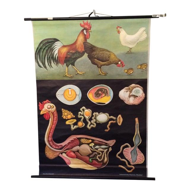Jung-Koch-Quentell Chart Chicken - Image 1 of 11
