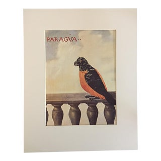 "Albert Eckhout's Imaginary Parrot - 1970s Print of 1644 Painting From ""Birds of Brazil"" For Sale"