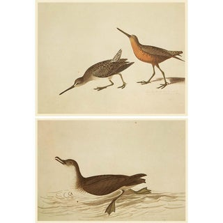 Manx Shearwater and Curlew Sandpiper by John James Audubon, 1966 Vintage Cottage Prints For Sale