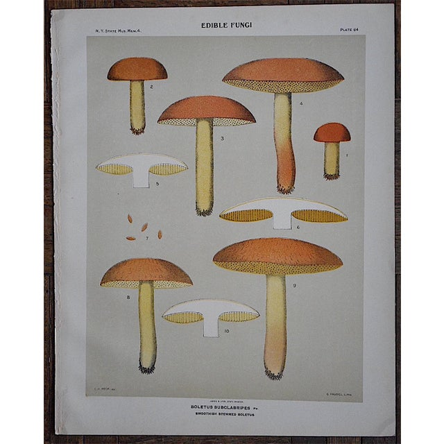 Country Antique Mushroom Chromolithograph For Sale - Image 3 of 3
