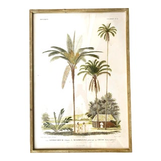 Contemporary French Indochina Botanical Palm Tree Reproduction Print, Framed For Sale