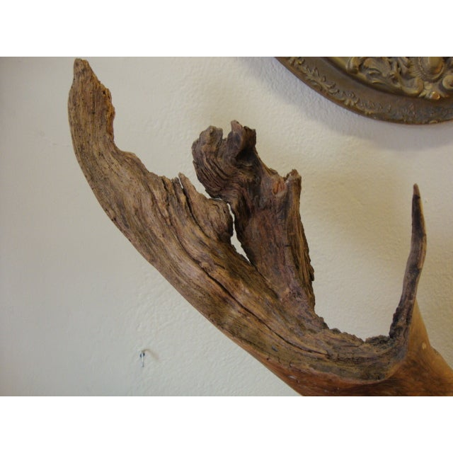 1960s Mid-Century Driftwood Free Form Sculpture For Sale - Image 5 of 7