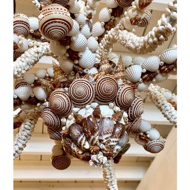 Contemporary Natural Five-Light Brown and White Shell Chandelier For Sale - Image 3 of 5
