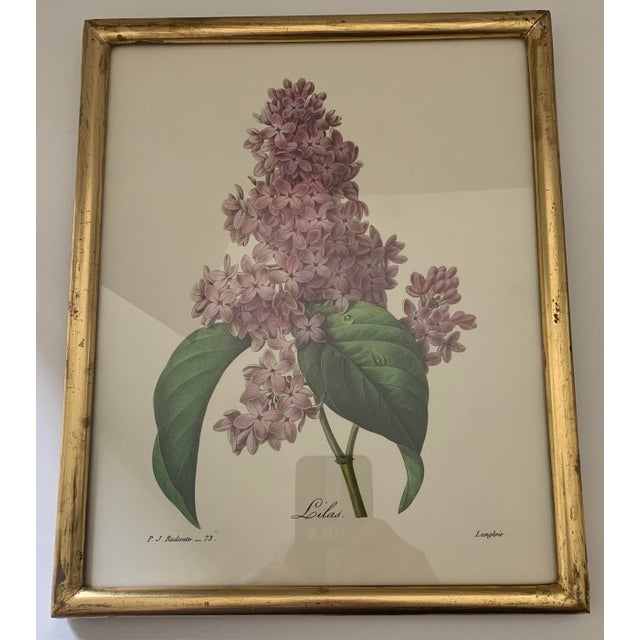 Reproduction Antique Botanical Print Lilac Framed For Sale In New York - Image 6 of 12