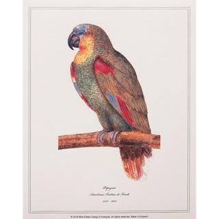 1590s Small Parrot Print by Anselmus De Boodt For Sale