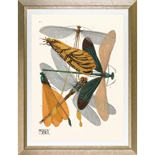 """Framed E. A. Seguy Print, """"Insects"""" Plate No. 9 For Sale"""