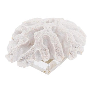 White Specimen Coral on Lucite For Sale