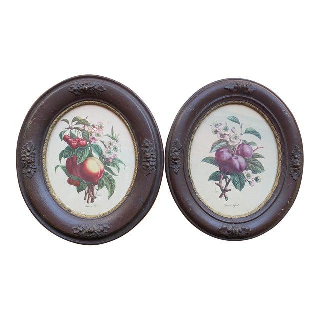 Antique Framed Botanical Prints - a Pair For Sale