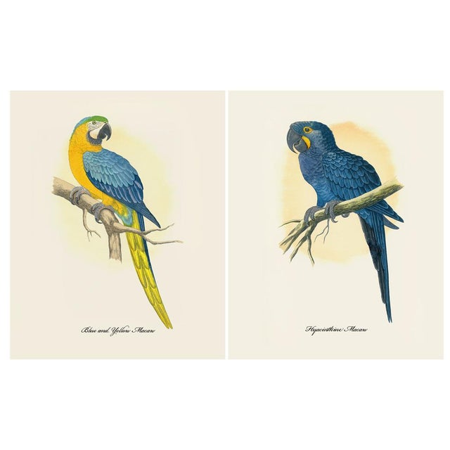 American Classical 1884 Alexander Francis Lydon, Parrot Reproduction Set of 12, N1 For Sale - Image 3 of 11
