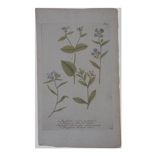 Johann Weinmann Botanical Mezzotint C.1740-Folio Size