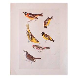 1966 Birds of America Print by John James Audubon For Sale
