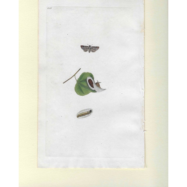 From a group 19th century hand colored engravings of insects removed from a volume on entomology aka bugs. These would...