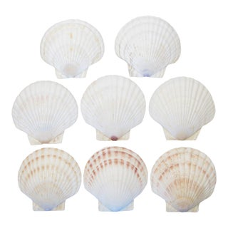Natural Shell Serving Pieces - Set of 8 For Sale